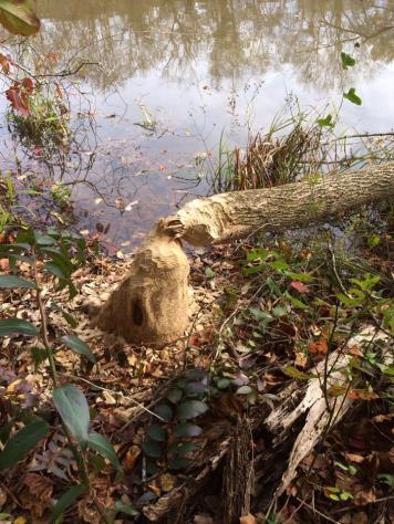 CNRCA on Bull Sluce Lake 11-01-13