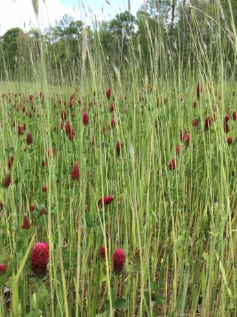 red-thistle-field